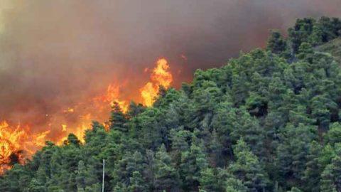 Mutamento climatico: aumento del rischio di incendi nell'area mediterranea