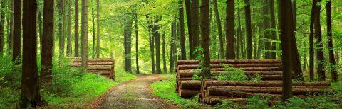 """Convegno """"Valorizzazione del legno-energia e manutenzione del territorio"""". Piacenza, 28 ottobre 2017"""