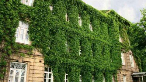 Un cappotto verde per risparmiare energia